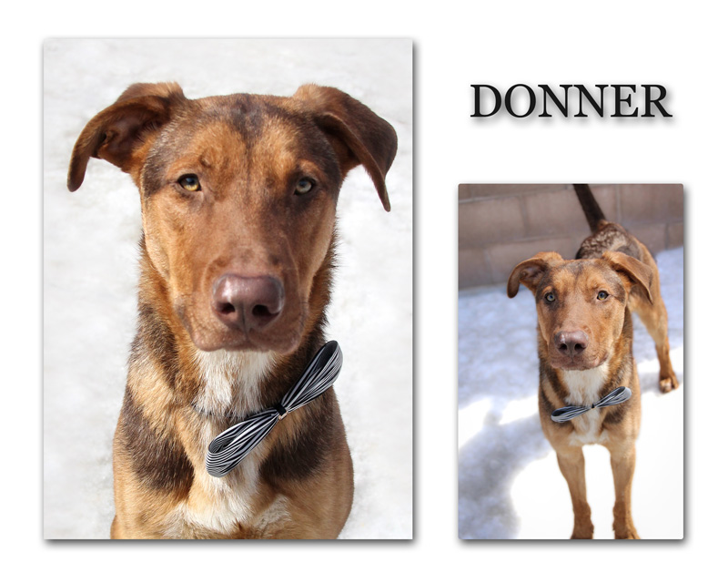 donner_collage