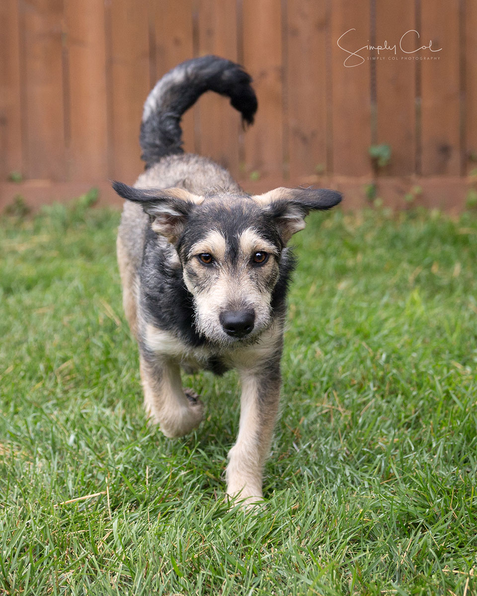 Adopted Dogs Availbel In Winnipeg