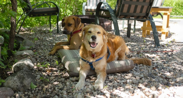 Life With Dogs – June2021