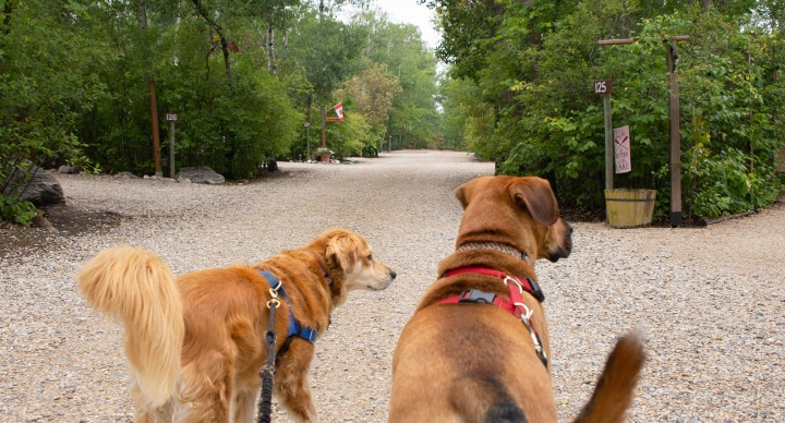 Life With Dogs – August2021
